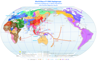 This spectacular map traces Y-DNA haplogroups around the world. Kennewick Man's Y-DNA haplogroup is Q-M3. Gorgeous map by Chakazul, courtesy Wikimedia. CC-BY-SA-3.0