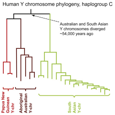 Deep Roots for Aboriginal Australian Y Chromosomes, courtesy the authors and Current Biology. CC-BY-NC-ND-4.0