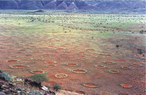 Fairy circles are the telltale rings dotting this oddball natural landscape in the arid grasslands bordering the Namib Desert. Photograph by Stephan Getzin, courtesy Wikimedia. CC-BY-SA-3.0