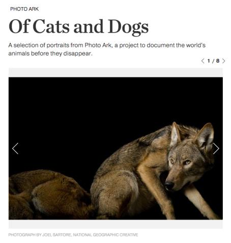photoark-cats-dogs