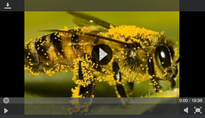 bee-video.png
