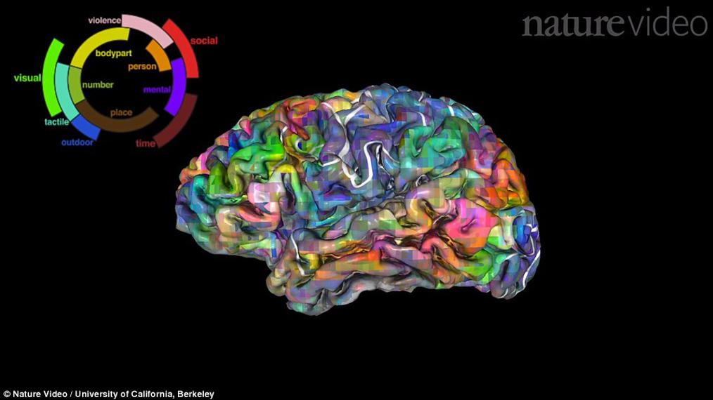 Brain Atlas' Charts How We Navigate Language – National