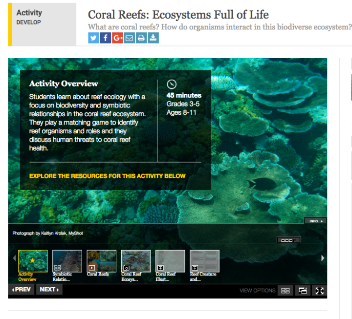 coral-reef-activity.png