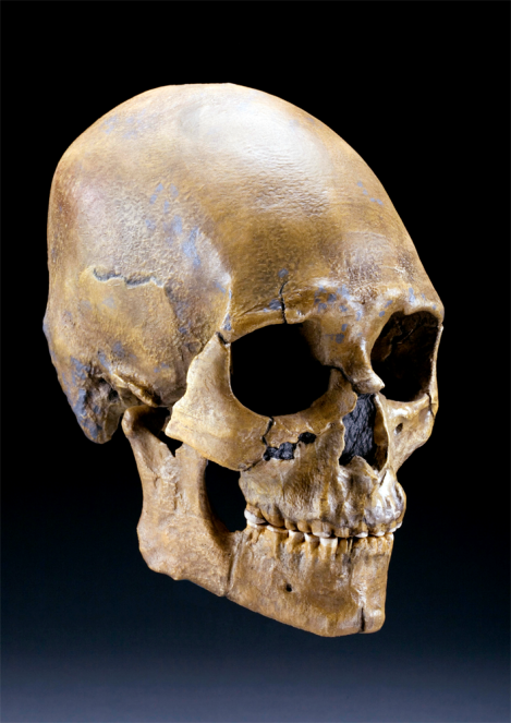 "Native American groups call Kennewick Man the ""Ancient One,"" and regularly visit the skeleton at the Burke Museum of History and Culture in Seattle, Washington. Photo by Chip Clark, Smithsonian Institution"