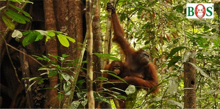 Mawas_Baum-pflanzen_orangutan.de_1262x628_1