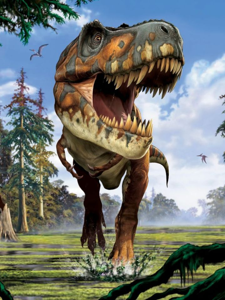 This fantastic illustration of a Tyrannosaurus rex may have to be updated to include scaly retractable lips to cover those ferocious fangs. Illustration by Franco Tempesta, National Geographic