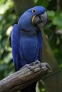 Polly want a pigment? Photograph by Hank Gillette, courtesy Wikimedia. CC-BY-SA-3.0