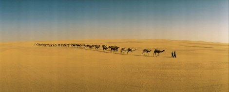 A 500-strong camel caravan winds through the desert from the oasis town of Bilma, Niger. Photograph by James L. Stanfield, National Geographic