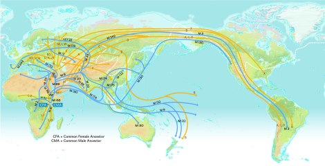 Genetic analyses indicate that there were three distinct waves of prehistoric migrants from Asia to North America. Y-DNA haplogroups are indicated by the blue lines, while mitochondrial DNA is indicated by the yellow lines. (Note: Since this map was published in 2008, the M3 mutation has been grouped under the larger haplogroup Q. (So, Q-M3.)) Map by National Geographic Society