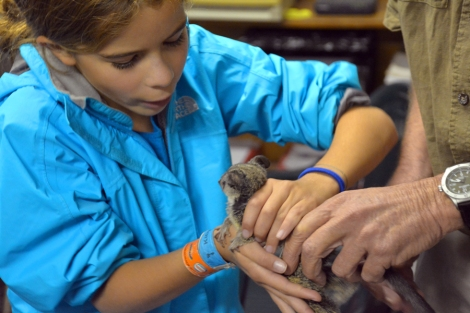 Botswana---rescued-bushbaby