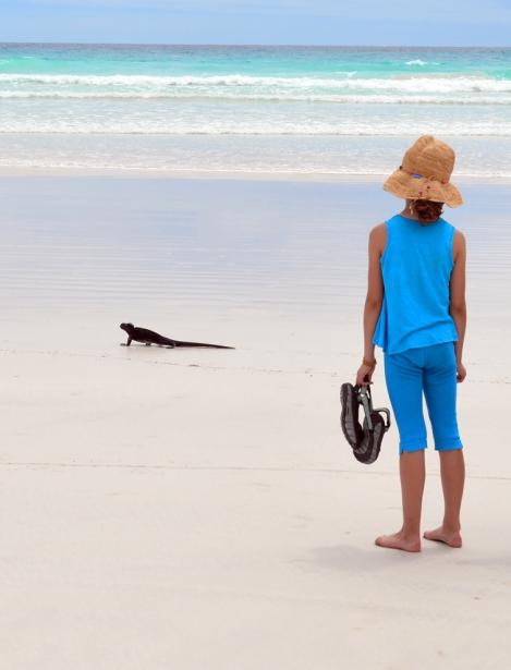Galapagos---Marine-Iguana