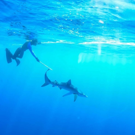 Asher swimming with sharks off the coast of San Diego. Photo provide by Asher Jay.