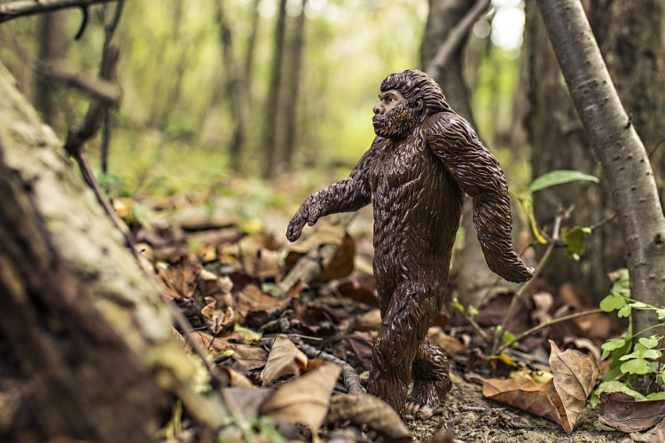 Bob Gimlin was a small town cowboy when his friend coaxed him into hunting the famous mythical creature 50 years ago. Today, as the legend of Bigfoot has grown, Gimlin is viewed by the community of believers around the country as something of a prophet. Photograph by Ryan McGuire, courtesy Pixabay. Public domain