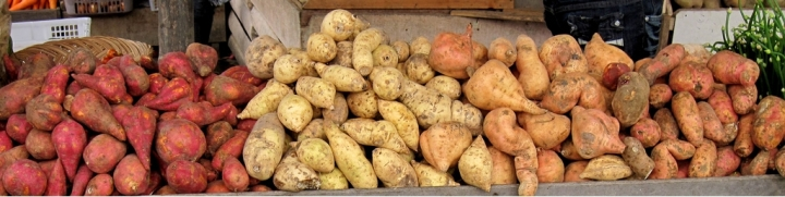 Sweet potatoes are indigenous to the Americas. Their skins come in yellows, oranges, reds, browns, and purples. Their flesh can be whites, reds, pinks, purples, yellows, or oranges. Ivan Atmanagara, courtesy Wikimedia. CC-BY-SA-3.0