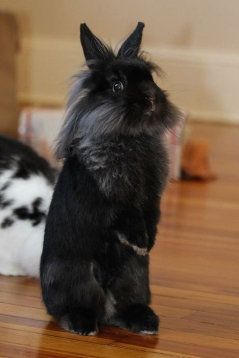 Bunny on her back legs