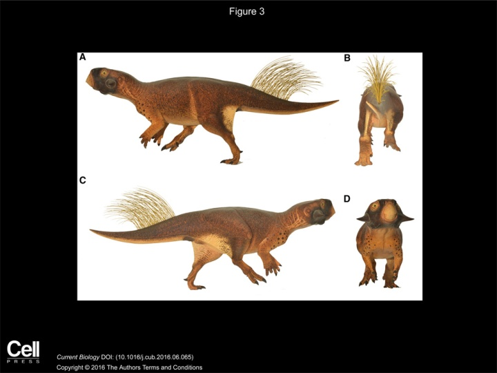 """""""3D Camouflage in an Ornithischian Dinosaur."""" Vinther, Jakob et al. Current Biology, volume 26, issue 18. CC-BY-4.0"""