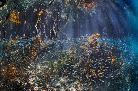 This beautiful Brian Skerry seascape is so dazzlingly biodiverse we don't quite know where to look! This mangrove forest is in Belize. Photograph by Brian J. Skerry, National Geographic