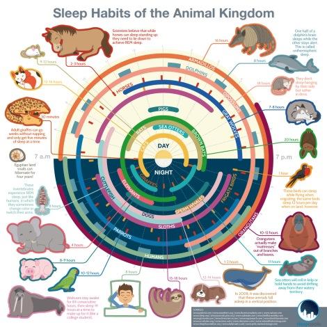 Infographic courtesy Sleepopolis