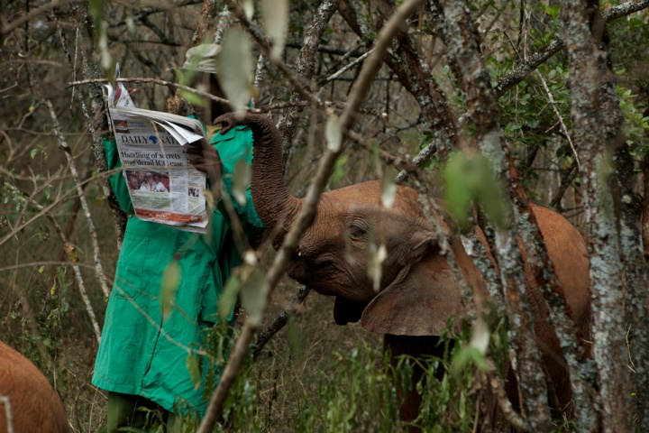 Elephant Orphans MM7913