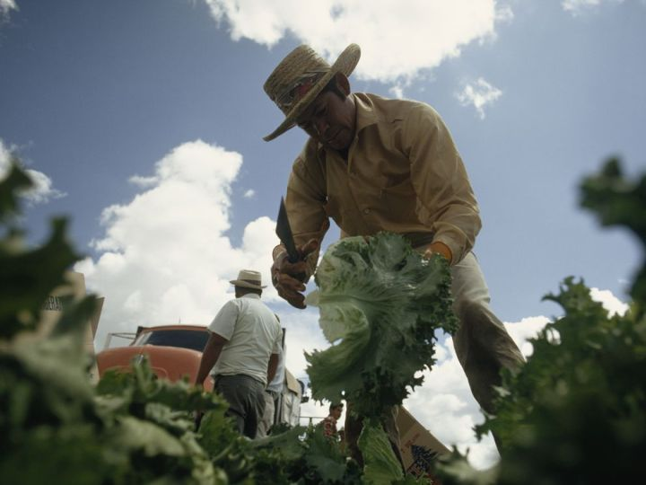 Of the roughly 2.5 million farmworkers in America, only around 25,000 are unionized. And only a small percent of those 25,000 work on organic farms. Photograph by James L. Amos, National Geographic