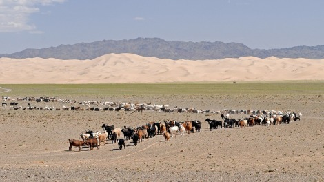 Mongolian shepherds keep track of their goats in the Gobi Desert. Photograph by hbieser, courtesy Pixabay. Public domain