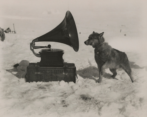 A sled dog belonging to Amundsen's rival, Robert Falcon Scott, checks out a gramophone during their expedition to the South Pole. Photograph by Herbert G. Ponting, National Geographic.