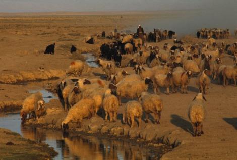 isis threatens iraqi wildlife   nat geo education blog