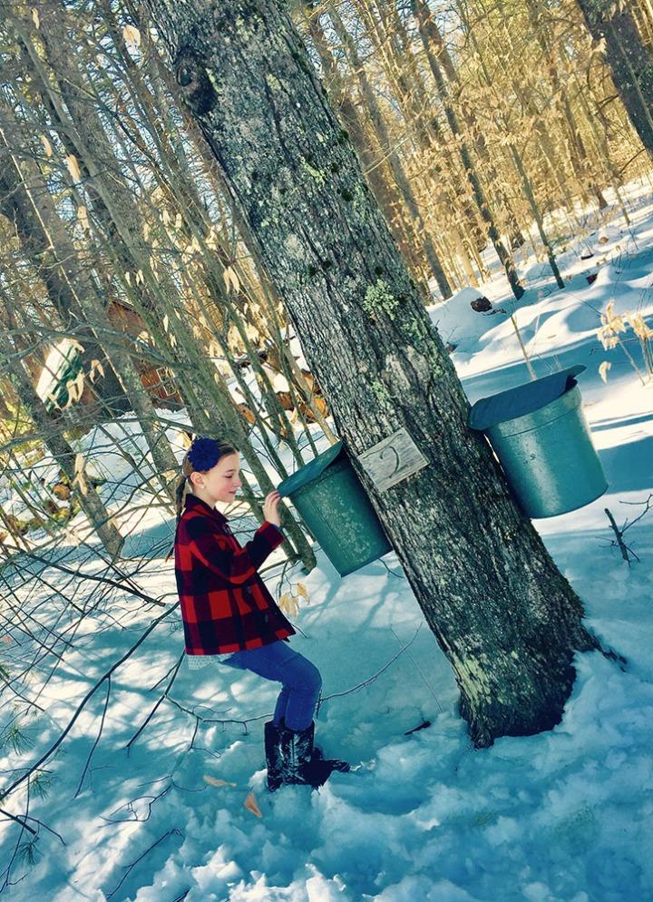 Maple Tree and Bucket