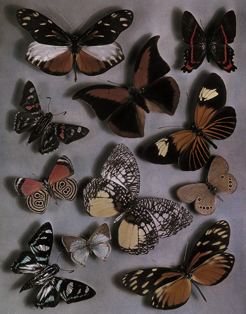 Patterns, Genes, and Butterfly Wings - National Geographic ...
