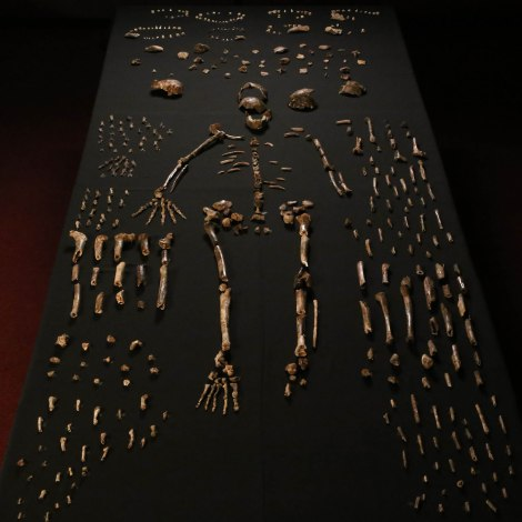 01-homo-naledi-bone-table-vertical-john-hawks-cc-by