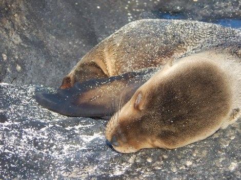 Sunning sea lion