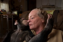The exotic pet trade is a lucrative part of wildlife trafficking, although the trade is often perfectly legal. This animal trainer bought a chimpanzee from pet owners who could no longer keep it. Photograph by Vincent J. Musti, National Geographic