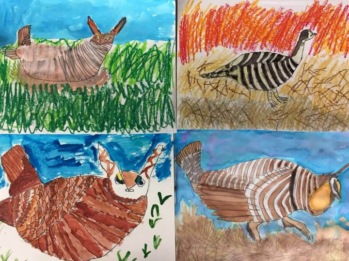 Student drawings of prairie chickens